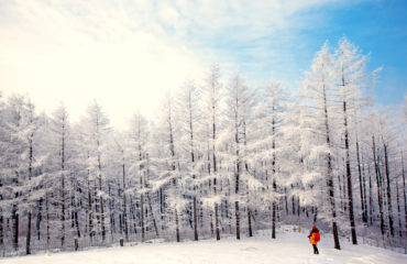 Snowy Trees in Daegwallyeong Yangtte Farm Korea