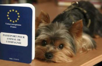 dog passport