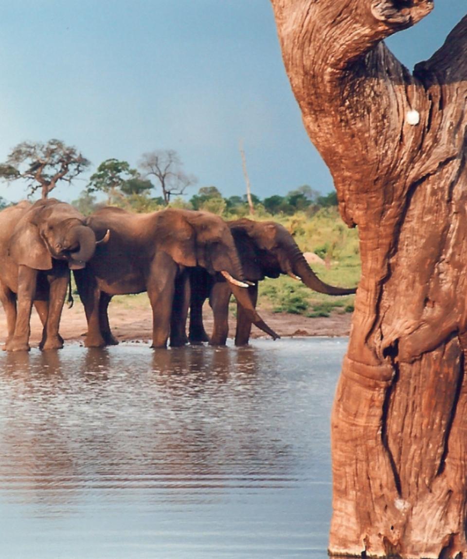 Safari Id International